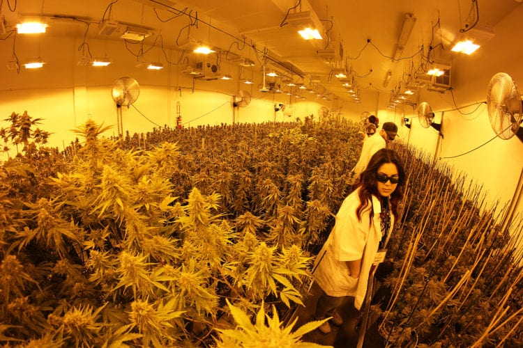 solstice facility tour greenside recreational seattle weed retailer